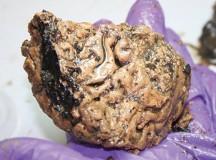 Самый древний человеческий мозг сохранила грязь