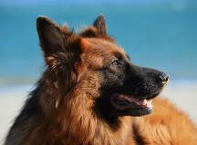Московские торговцы брезгливо отказались спасать собак от мороза